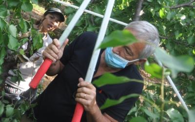 Reporterre – Juillet 2020 – Dossier : Dans les vergers du Sud, l'envers du « manger français »