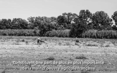 Le Média – Sept 2020 – Vidéo : Dans l'enfer des travailleurs agricoles