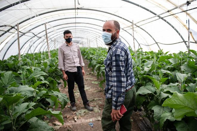 Médiapart – Juillet 2020 – Terra Fecundis: l'exploitation de travailleurs en «bande organisée» visée par la justice