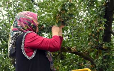 France Culture – Mars 2020 – La Covid-19 révèle la dépendance de l'agriculture à la main-d'œuvre étrangère